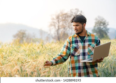 Selective focus medium shot asian men smart farmer in plaid shirt using modern digital technologies by laptop computer in barley grain farm field for agriculture industrial development.