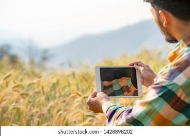 Selective focus medium shot asian men smart farmer in plaid shirt using modern digital technology by tablet computer in barley grain farm field for agriculture industrial development.