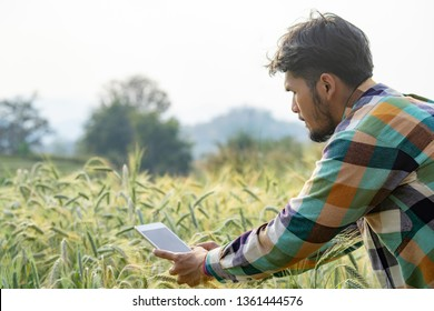 Selective focus medium shot happy smart asian men farmer in plaid shirt using modern digital technologies by tablet in wheat grain field for agriculture industrial development.