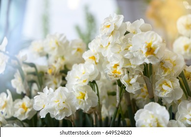 Selective focus of Narcissi Bridal Crown Flower, Spring flowers
