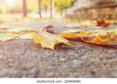 Selective focus on autumn leaves on the sidewalk as seen from a worm�s eye view./Autumn leaves