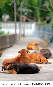Selective focus on black dog in a group of stray dogs lay in the way.