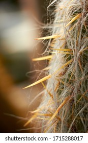 Selective focus on cactus spikes, blurred background