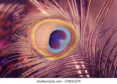 Selective focus on the centre eye of a peacock feather./Peacock Feathers