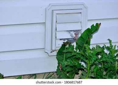 Selective focus on clogged and blocked dryer vent with large balls of lint stuck in the vent openings with the large weeds in front adding to the needed maintenance to keep vent clear.
