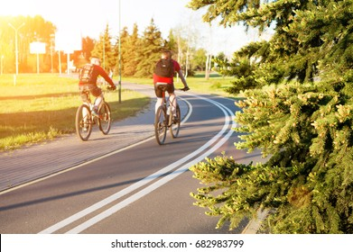 selective focus on green spruce needles. In the background two men riding bicycle in park in rays of the sun. Healthy lifestyle and friendship concept