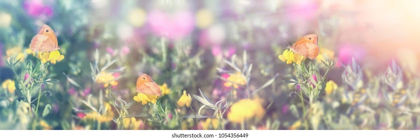 Selective focus on little butterfly - butterflies, beautiful meadow in spring (beautiful landscape)