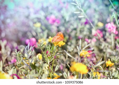 Selective focus on little butterfly - beautiful nature in spring (springtime)