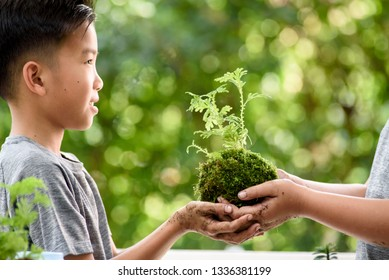 Selective focus on Little seedling plant in black soil on child hand. Earth day concept. in black soil on child hand. Earth day concept.