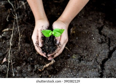 Selective focus on Little seedling in black soil on child hand. Earth day concept.