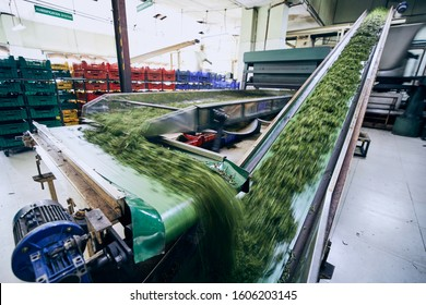 Selective focus on production line inside tea factory. Production line inside tea factory, Sri Lanka.