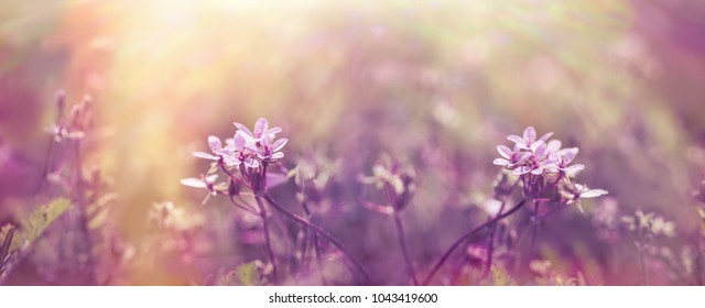 Selective focus on purple flower in meadow - beautiful nature in spring