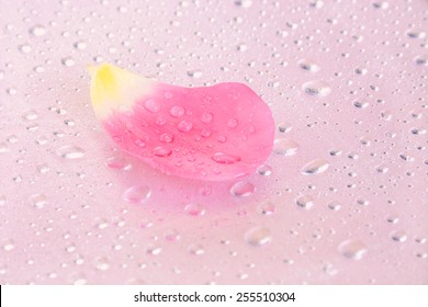 Selective focus on a single petal of a pink tulip with water drops.