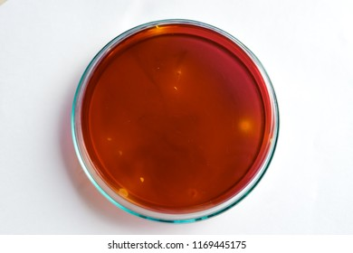 Selective focus on yellow colonies of Lactobaccillus sp. on purple-red media in glass plate. Concept of microbial laboratory.