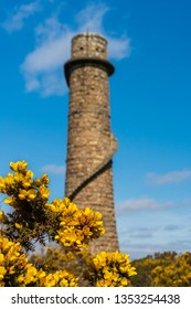 Selective focus on yellow gorse flowers framing the ruins of the flue chimney of Ballycorus Lead Mines, located in Dublin Mountains, Ireland, on a lovely sunny spring day.