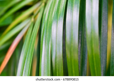 Selective focus of palm leaves pattern in tropical forest