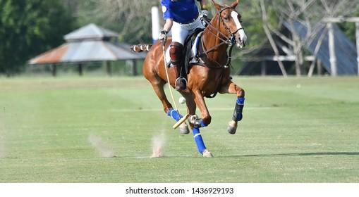 Selective focus the Polo Horse Player Riding To Control The Ball.