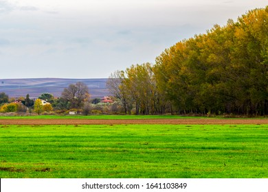 Selective focus, shallow depth of field at Zlato Pole or Gold Field Protected Area, Municipality of Dimitrovgrad, Haskovo Province, Bulgaria. Agricultural landscape - Shutterstock ID 1641103849