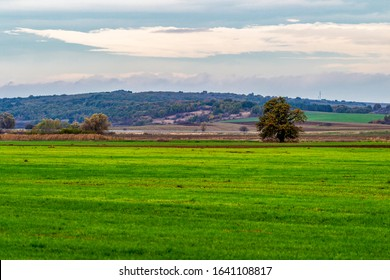 Selective focus, shallow depth of field at Zlato Pole or Gold Field Protected Area, Municipality of Dimitrovgrad, Haskovo Province, Bulgaria. Agricultural landscape - Shutterstock ID 1641108817