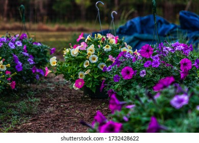 Selective focus shot of annual flowers growing at a plant nursery