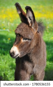 A selective focus shot of a cute baby donkey in a green background