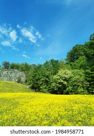 A selective focus shot of a fieldfull of yellow flowers surrounded by trees in Larvik, Norway