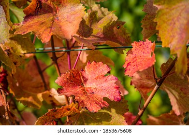A selective focus shot of red leaves on tree branches on an autumn day