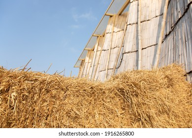 Selective focus shot of straw stack packed in rural farming area seeing wooden beautiful design barn with clear sky. It is beautiful background for agricultural harvesting concept in summer.