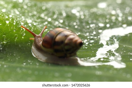 selective focus snail is classified as invertebrates. Like a Vegetarian Diet