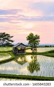 (Selective focus) Stunning view of a farmer hut's and a beautiful and colorful morning sky reflected in the rice fields. Jatiluwih rice terrace, Tabanan Regency, North Bali, Indonesia.