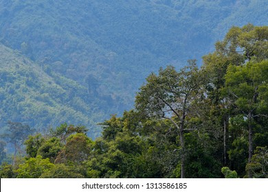 Selective focus the tree on the mountain in the tropical forest at west of Thailand.
