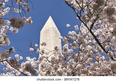 Selective focus was used on this image of Japanese cherry trees in full bloom around the Tidal Basin in Washington, DC.  The Washington Monument, a US National landmark, can be seen in the background.