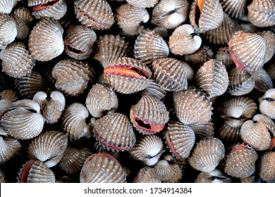 Selective focus view of raw shell ark clams. cockle shells for sale in the market, cockles seafood