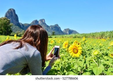 selective focus of women take a photo in sunflower field ,lopburi  thailand