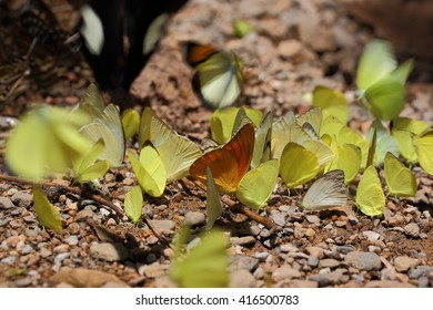 Selective focus of yellow butterflys on abstract nature background.