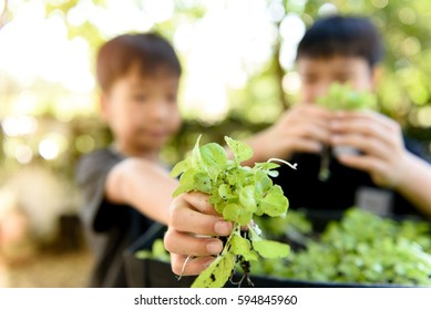 Selective focus at young asian boy hand pick and harvest little seedling of vegetable from black soil in home garden.