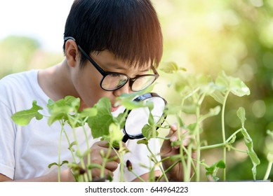 Selective focus at young asian Thai boy interesting in young plant seedling growing from soil and look by magnify glass in the garden. Earth day concept and global warming.