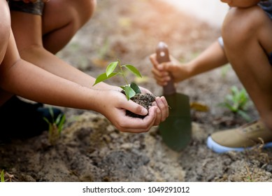 Selective focus at young and little plant seedling that take care and put in a dry soil to grow it. Earth day concept.