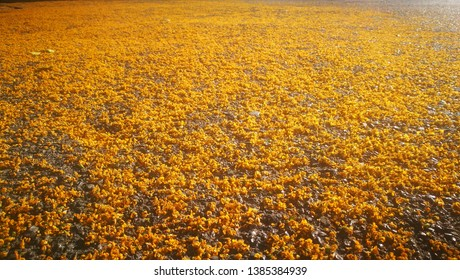Selective focusing of fallen yellow flowers on the road