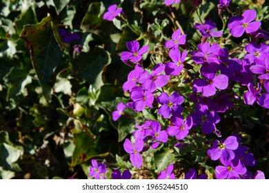 A selective fokus shot of small beautiful purple spring flowers