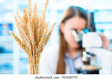 Selective and genetic work with seeds and grains in a scientific laboratory. Food quality control