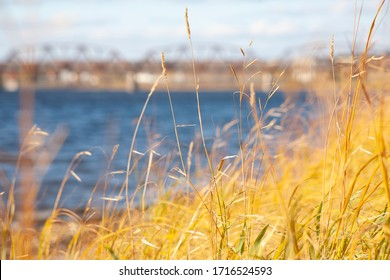 Selective soft focus of dry grass, reeds, stalks blowing in the wind at golden light, horizontal, blurred blue river and bridge on background
