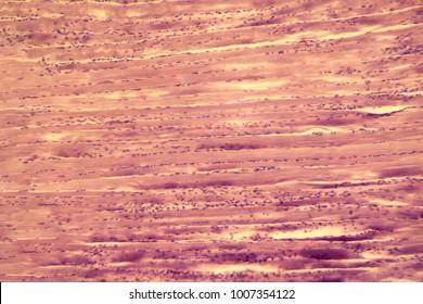 seletal muscle in microscope