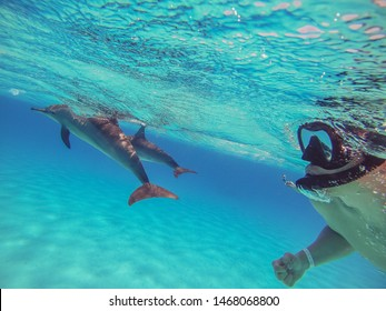 Selfie with dolphins. The guy swims with dolphins in the open sea and shoots them on the action camera.