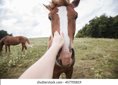 selfie with a horse. Photographer stroking the horse's hand. concept of friendship and care of animals, close-up