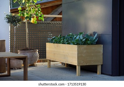 self-made raised bed with growing vegetables on a balcony