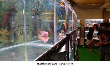 Semarang-Indonesia, March, 25 2019: Flowerhorn fish in aquarium.