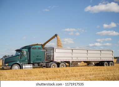 semi truck getting loaded with grain at harvest time