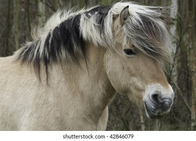 semi wild horse managing nature reserve