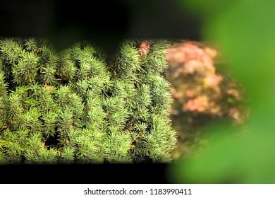 Jan Jacob Trip's Portfolio on Shutterstock